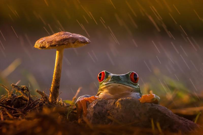 17. Дождь и свет