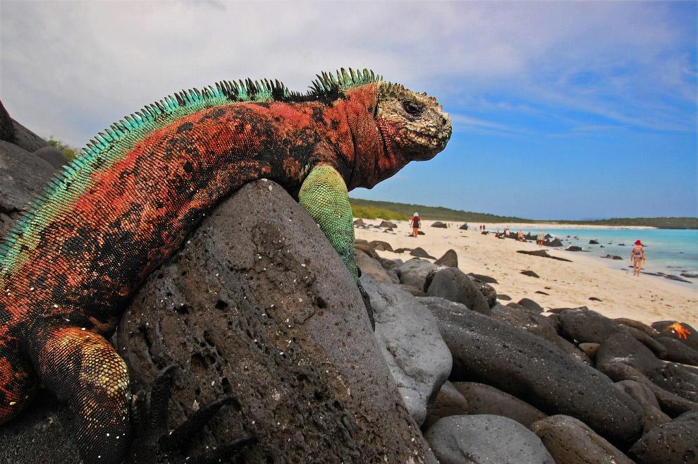 Средний вес каждой из них составляет около 12 кг, длина — около полутора метров. Голова морской