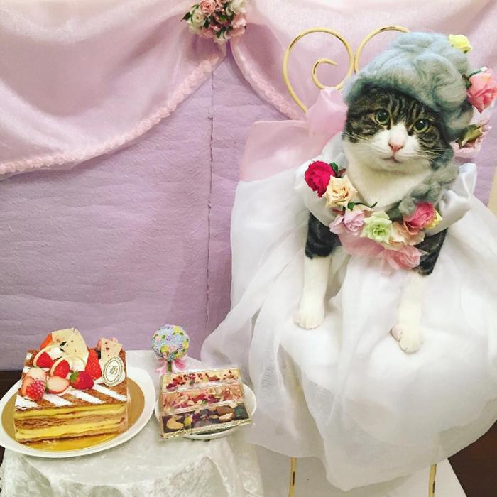 Фото самого терпеливого кота в мире
