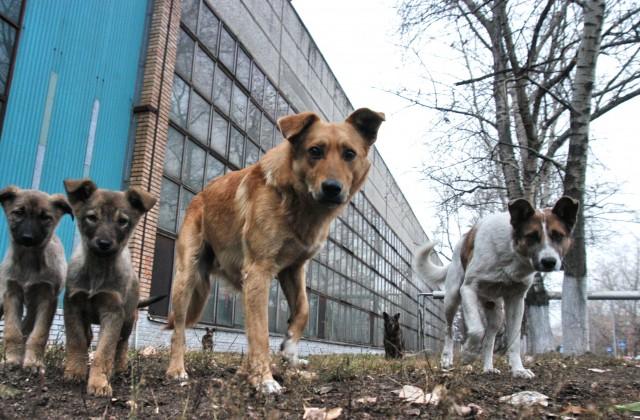 Неменее 700 бездомных собак отловили вСаратове всамом начале года