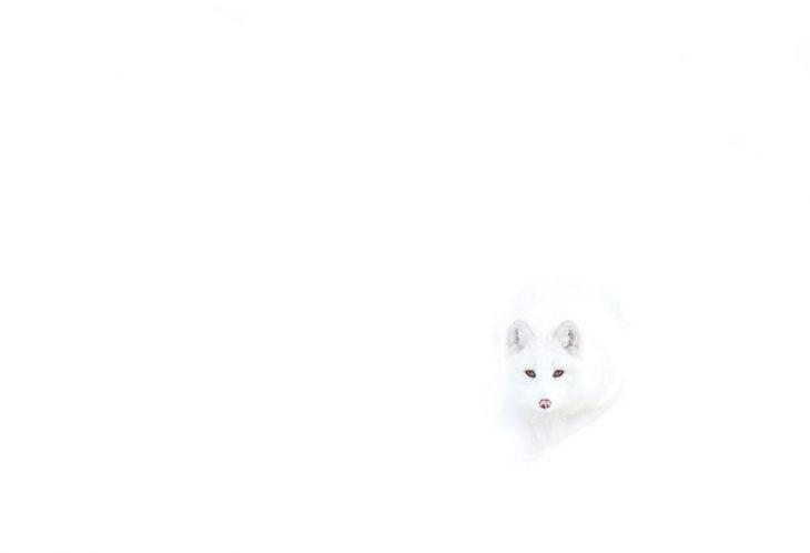 Найди лису
