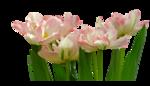 Mina@.fiori.21.4.15.png