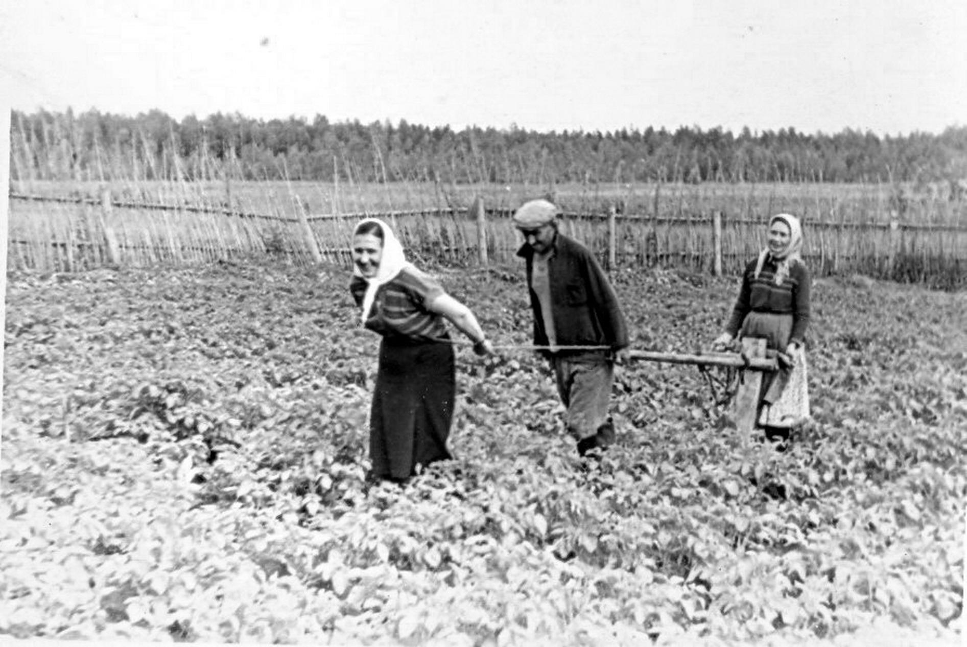 1961. На огороде