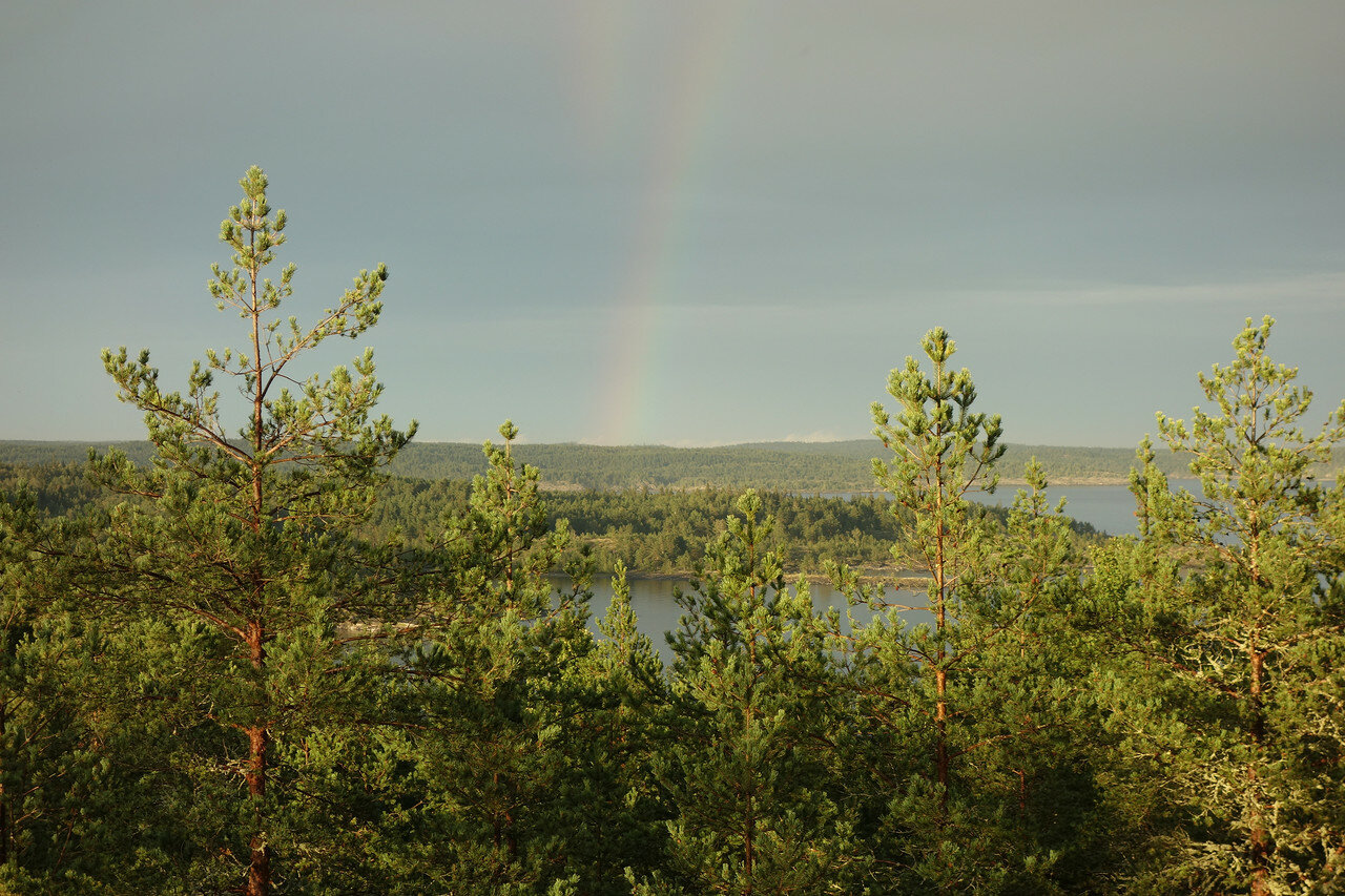 цветные полосы над лесом