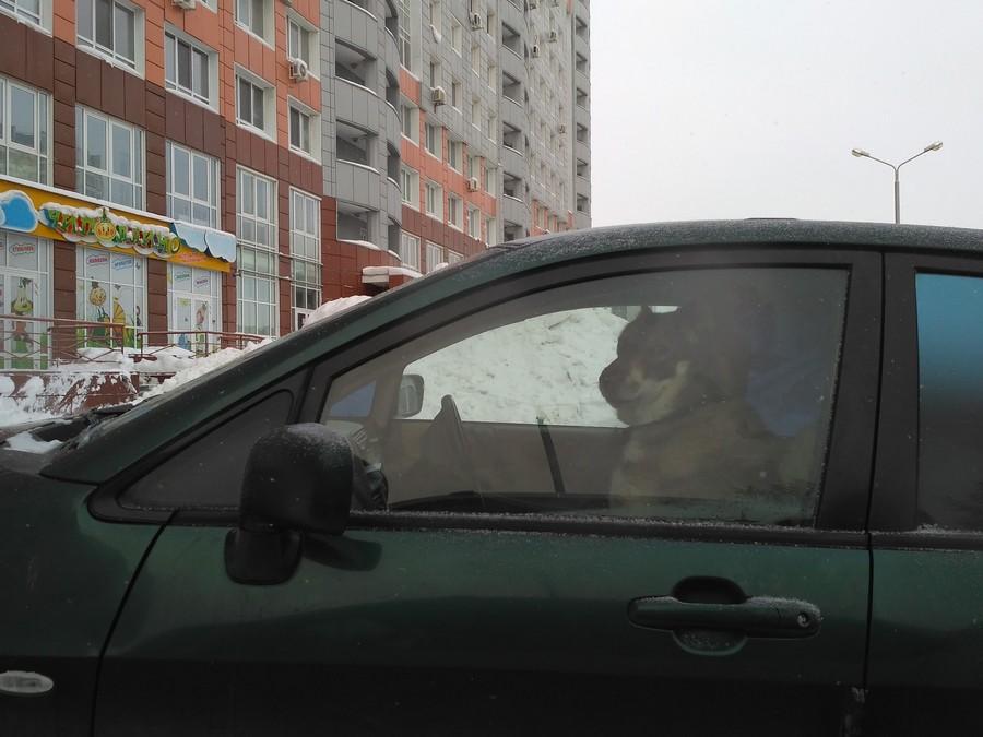 Подборка интересных и веселых картинок 04.02.17