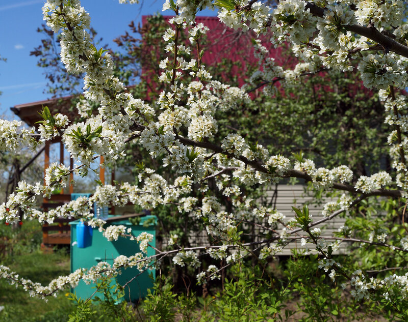 В майский день в саду