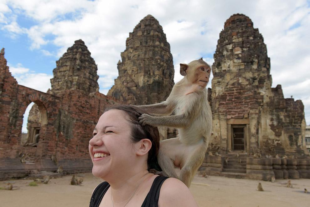 15. Эти обезьяны-воры стали настолько известными, что туристы со всего мира стекаются в город Л