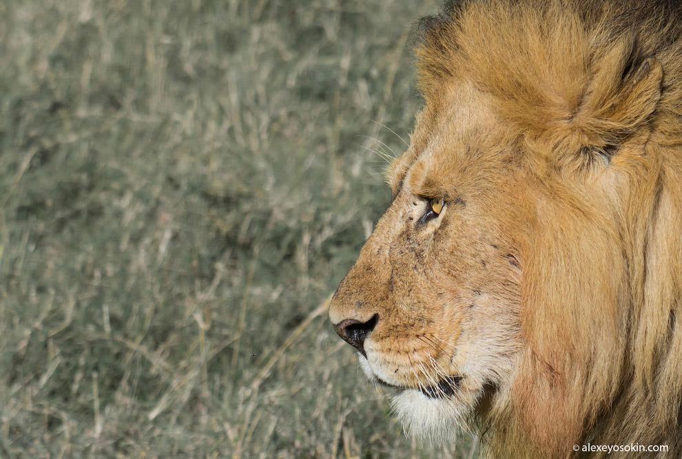21. День львов.