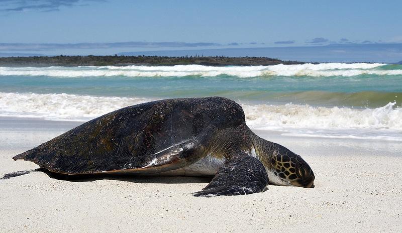 10. Тортуга-Бей («Бухта черепах»), остров Санта-Крус, Галапагосские острова, Эквадор. Лучшее время д