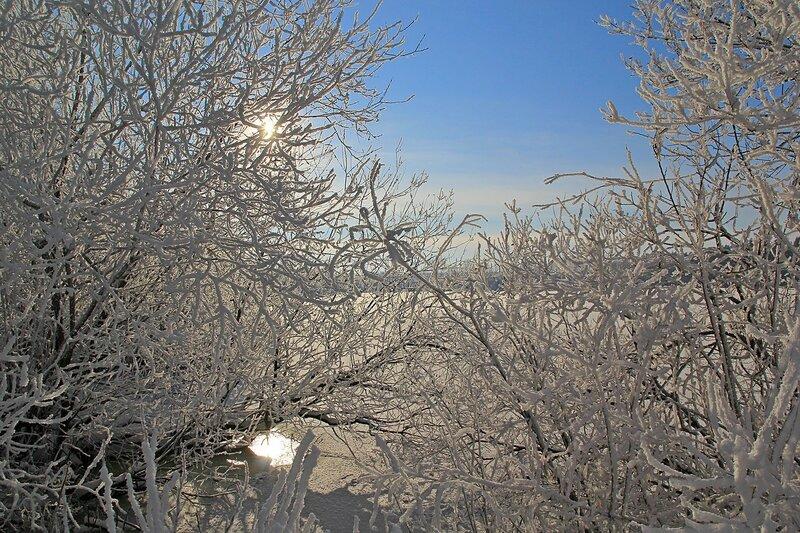 Зимний пейзаж озера Жуково (Кирово-Чепецк): солнце прячется среди покрытых толстым слоем инея ветвей прибрежных кустов