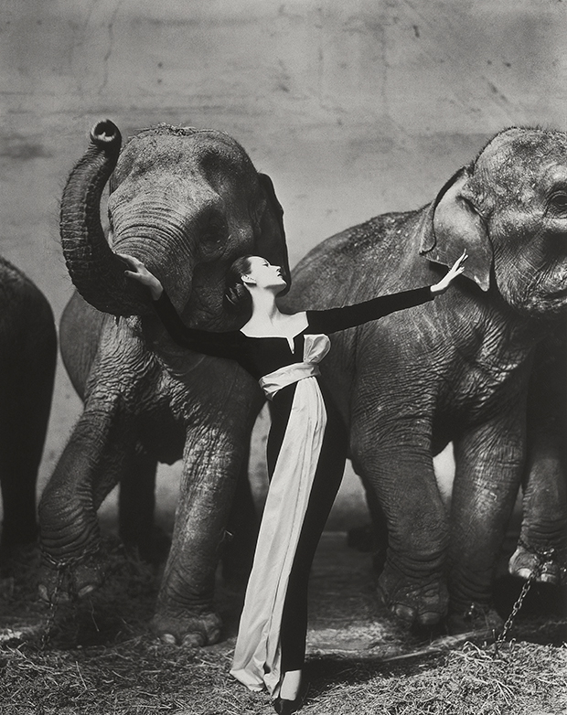 Dovima with elephants, evening dress by Dior, Cirque d'Hiver / Richard Avedon / 1955