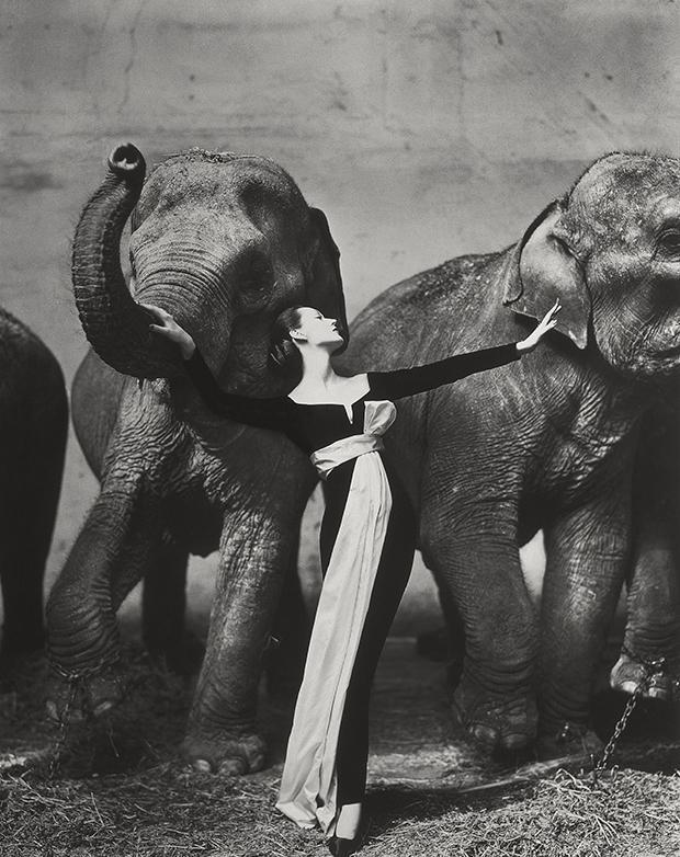 Dovima with elephants, evening dress by Dior, Cirque d'Hiver / Richard Avedon / 1955