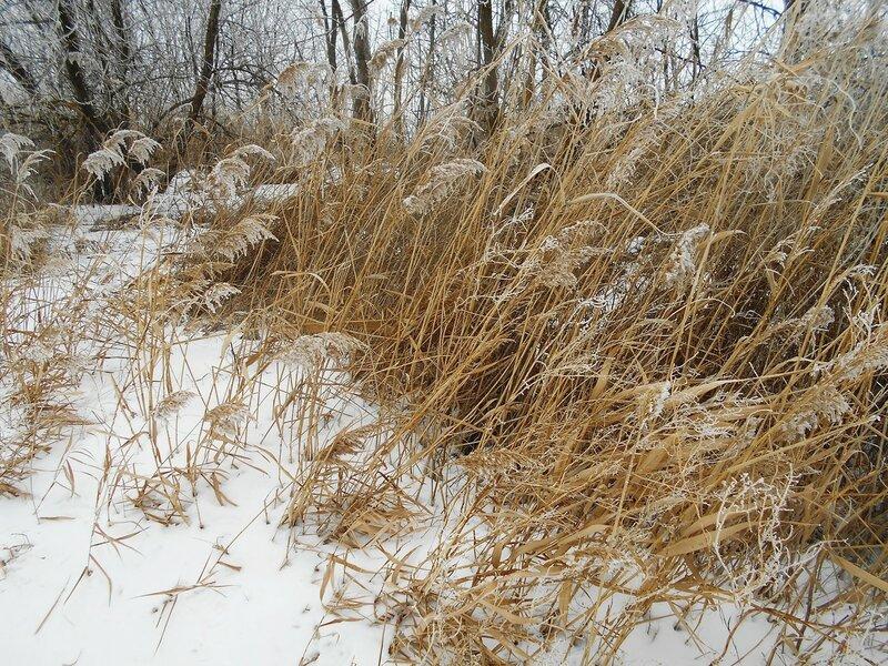 Зимнее ... В походе декабрьском, снежно-туманном,