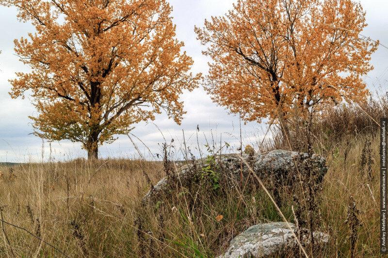 камень и два осенних дерева