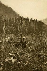 Сорняки долины Зено