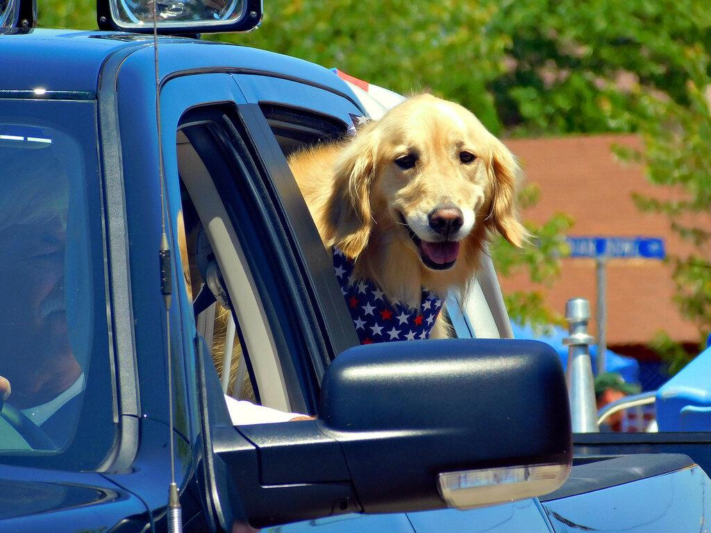 Собаки в автомобилях.