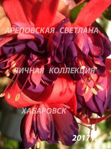 НОВИНКИ ФУКСИЙ. - Страница 5 0_1997dd_d5716947_L