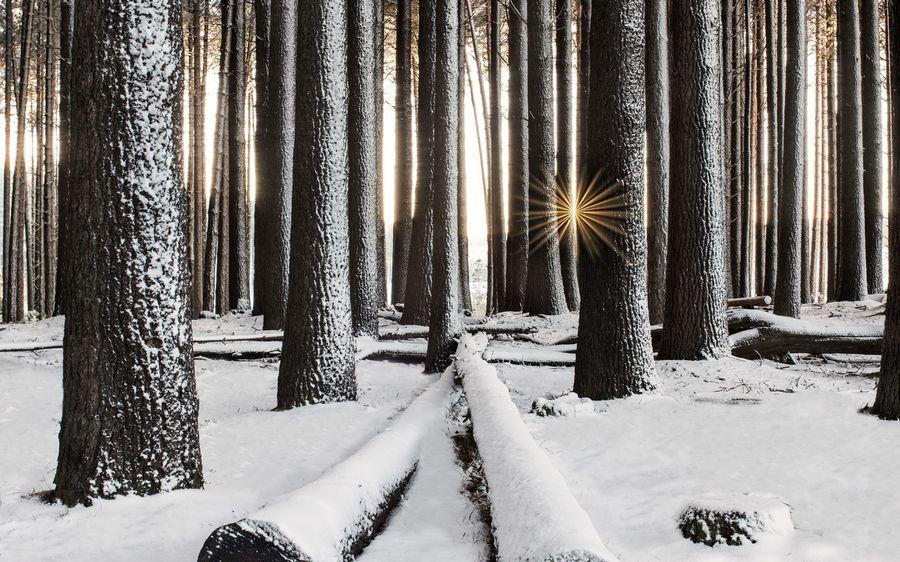 Зимний пейзаж Заставка рабочий стол