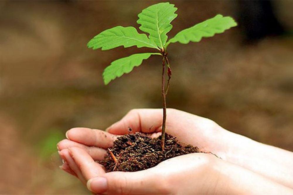 14 мая - Всероссийский день посадки леса