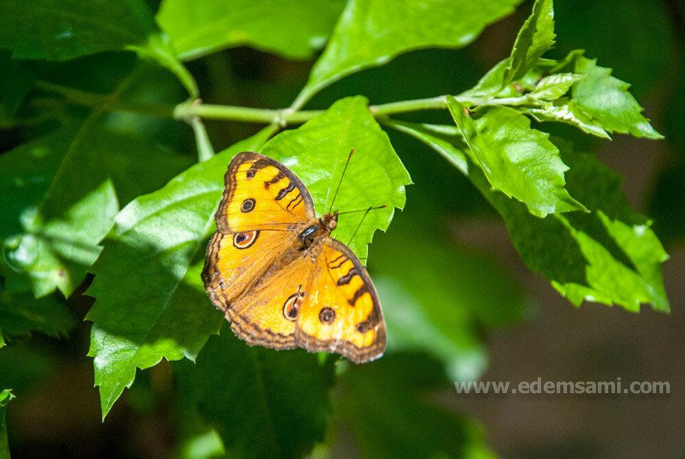 Парк бабочек на Пенанге