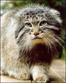 Кот Стержня.jpg