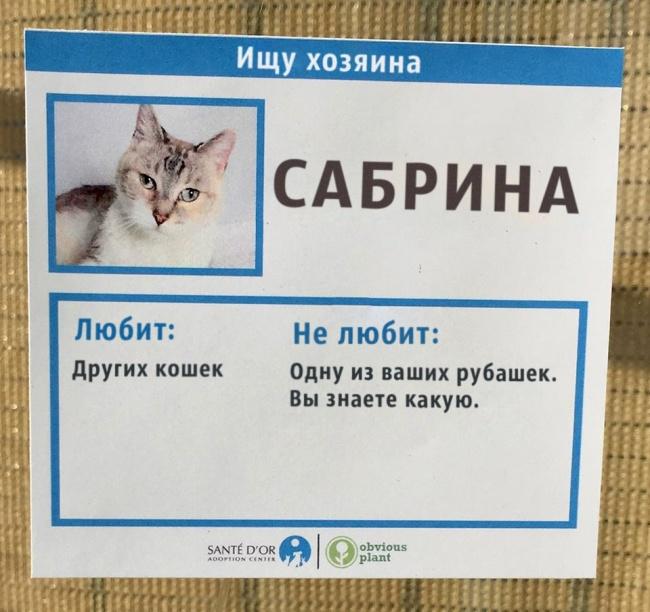 Приют для кошек придумал необычное решение, чтобы помочь животным найти хозяина