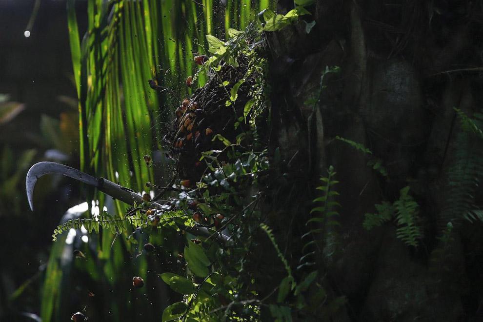 15. Слоны и масличные пальмы. (Фото Hotli Sumanjuntak):