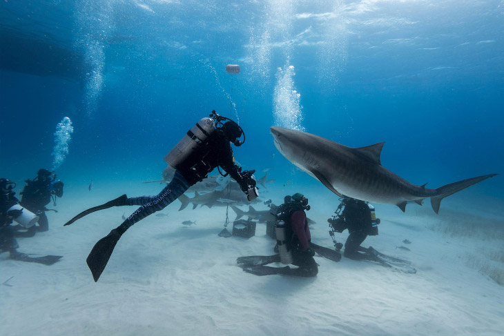Подводная встреча с акулой (13 фото)