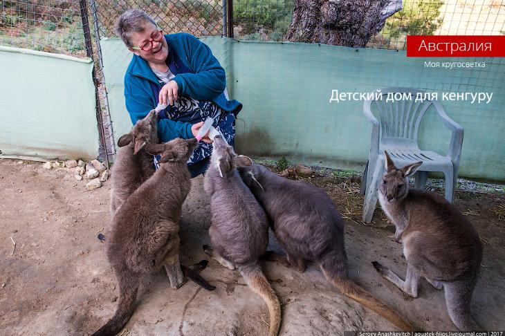 Детский дом для кенгуру (25 фото)