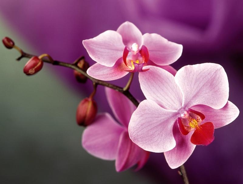 Orchids_04.jpg