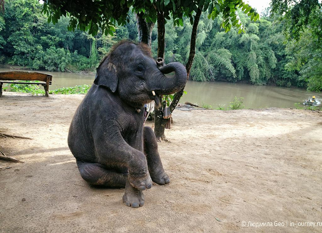 представление слонов фотография слона
