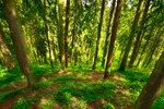 Аромат леса