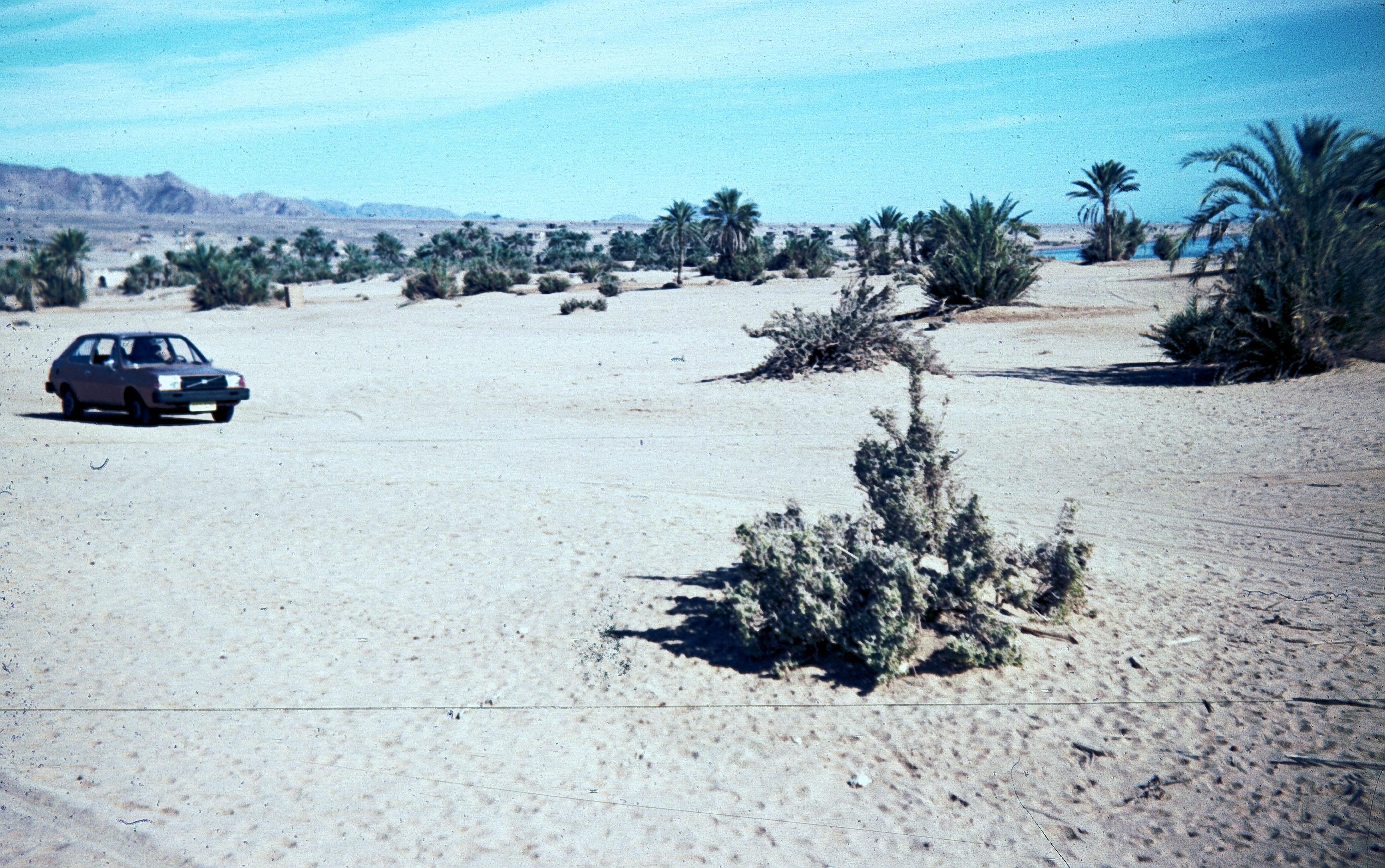 Синай. Залив Акаба