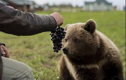 Медвежонок Мансур, обитающий на аэродроме в Тверской области, обзавелся берлогой с видеокамерой и собственным сайтом