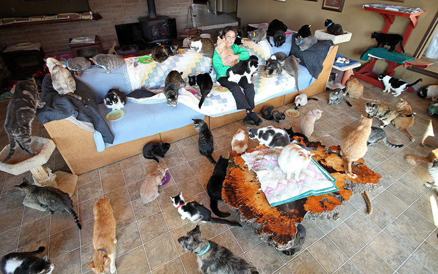Как живет женщина, у которой более тысячи котов (7 фото)