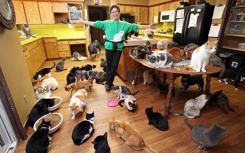 Женщина уверена, что она рекордсмен. Ведь за 24 года у нее побывало 28000 котов. Она подбирает котов
