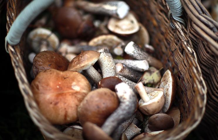 Российская Федерация накормит грибами полмира, ихунас как грязи— Ткачев