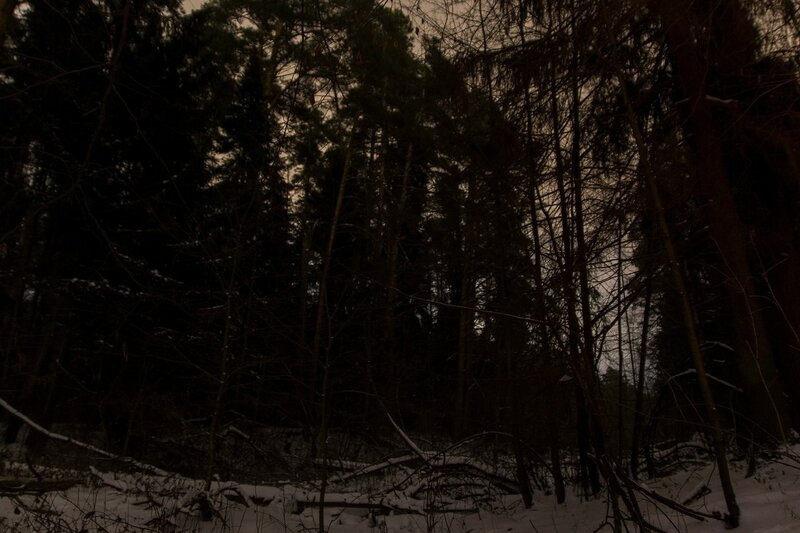 Зимний лес ночью: тёмные силуэты сосен и валежник на снегу