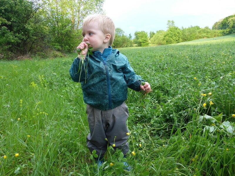 ребенок ест клевер на поле