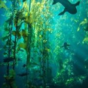 Видеть во сне водоросли в воде фото