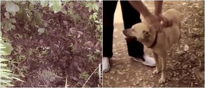 Собака спасла новорожденного ребенка, который был похоронен заживо