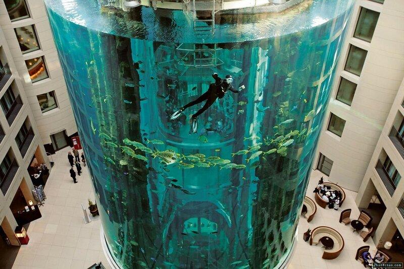 Гигантский аквариум для рыб и дайверов