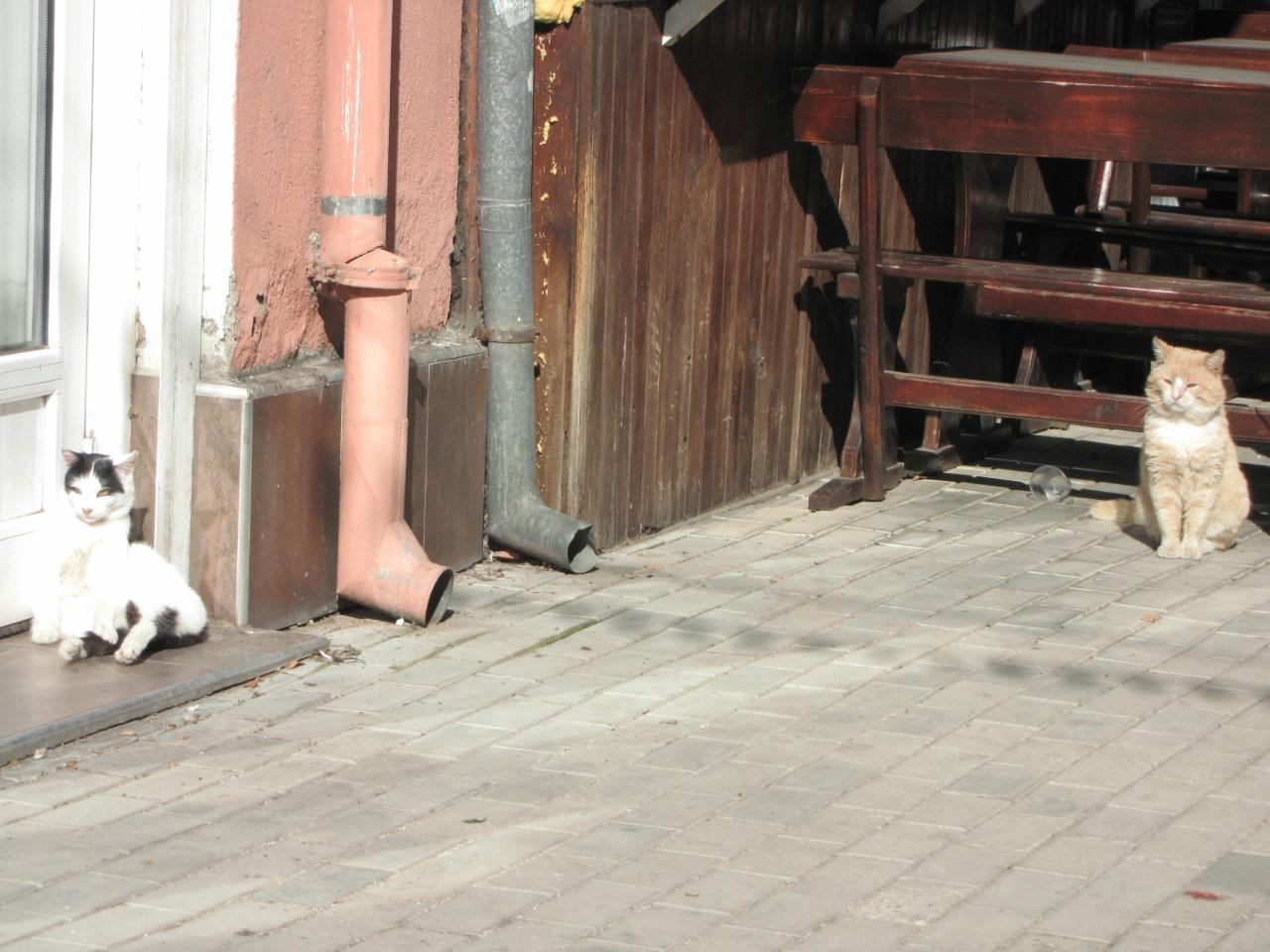 Коты в Казанлыке
