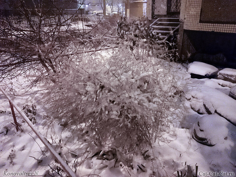 Первый снег, зима 2016-2017