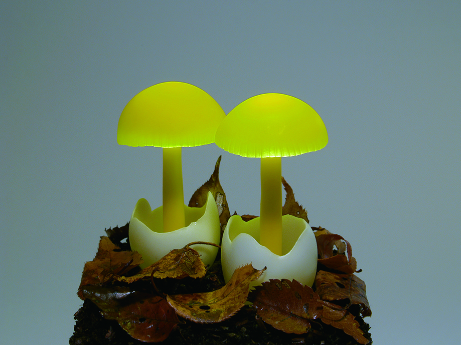 Светящиеся грибы от Yukio Takano (13 фото)