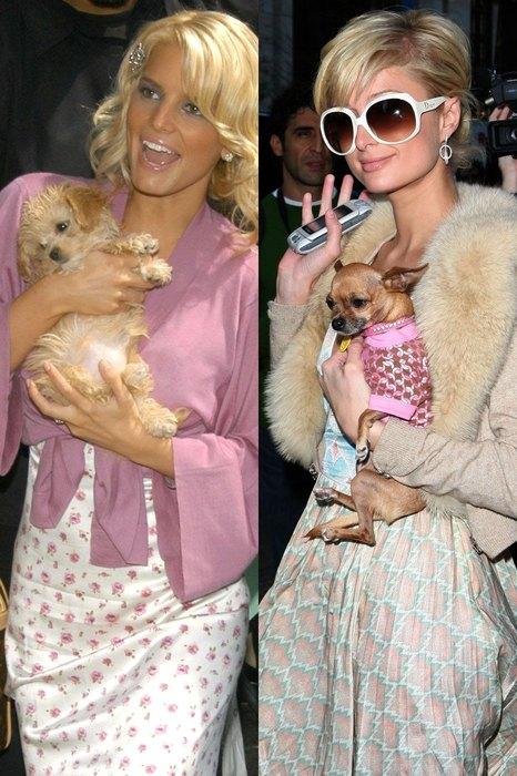 А бедные маленькие собачки, с легкой руки «королевы гламура» Пэрис Хилтон ставшие самыми настоящими