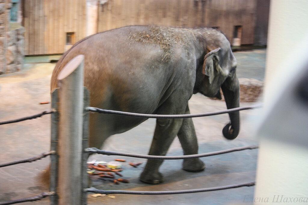 В зоопарке-45.jpg