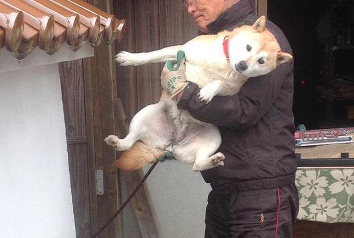 Собака решила помочь парню