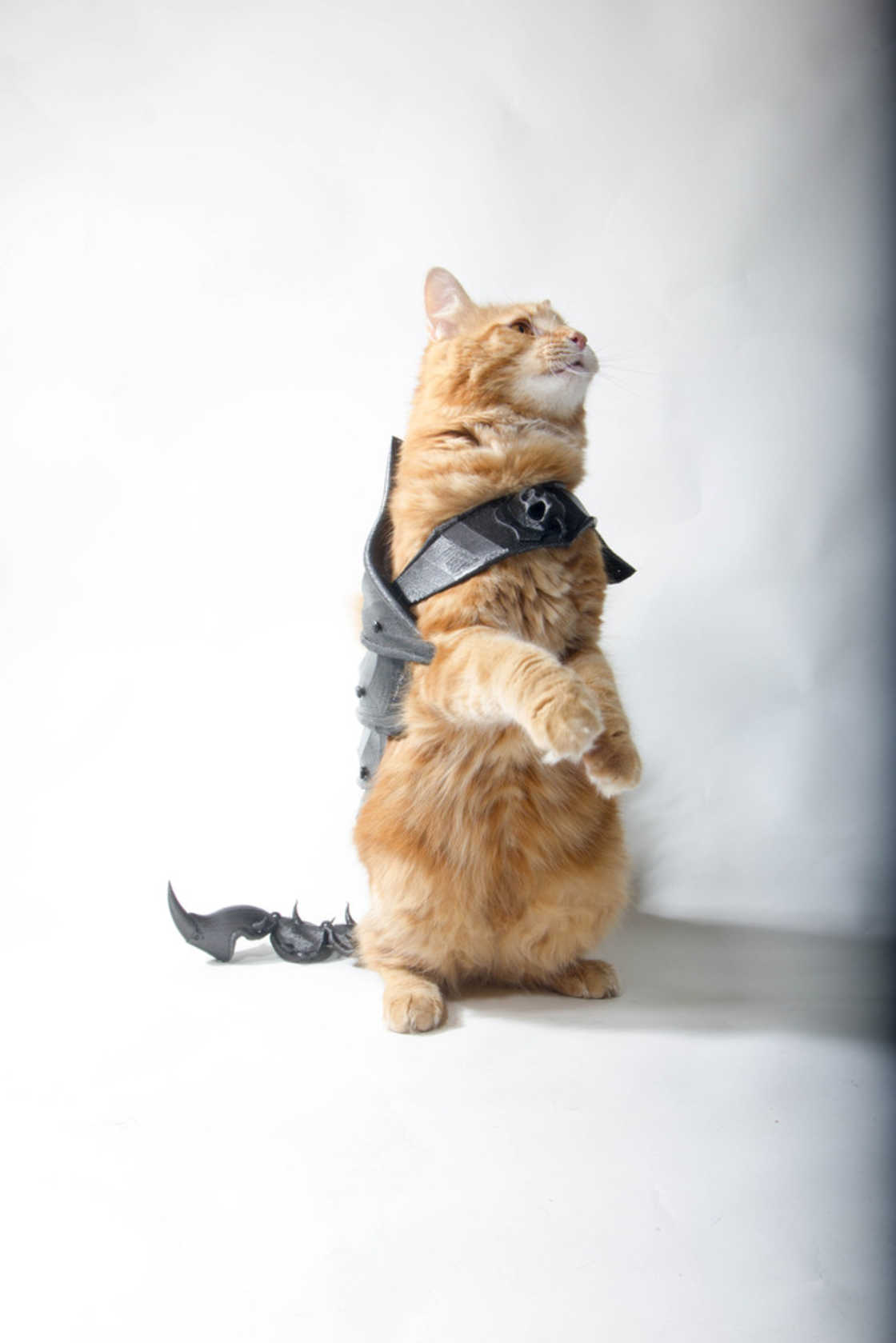 Build a 3D printed armor for your cat