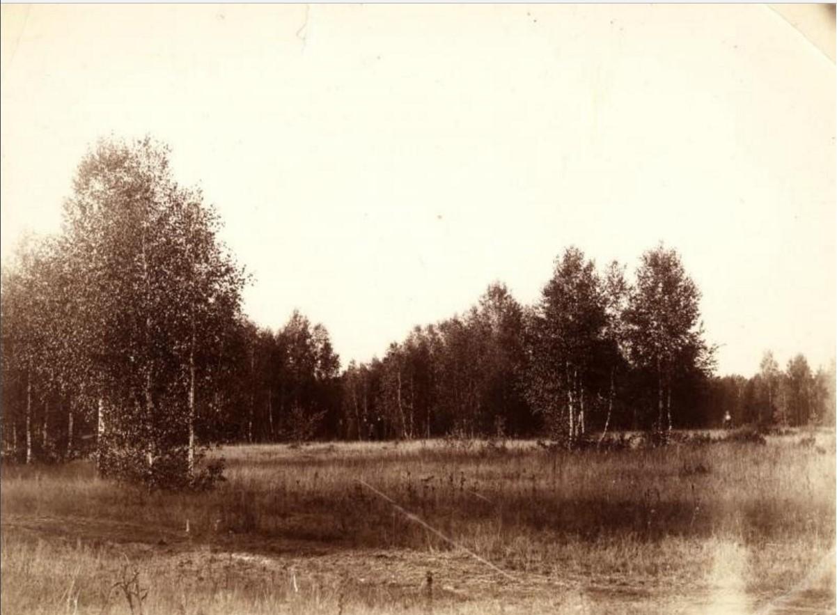 Лес в Шебанцеве. 1891